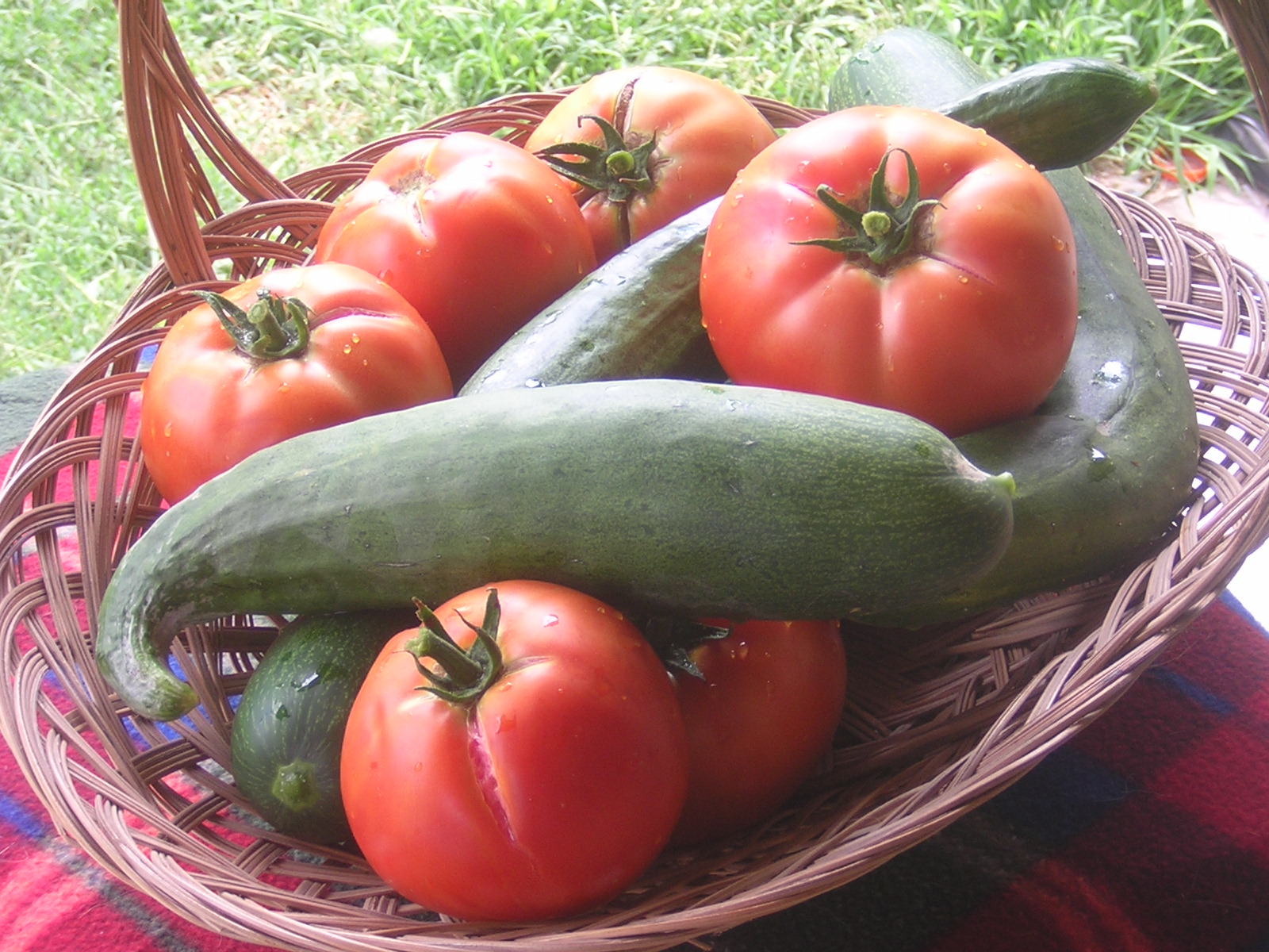 Tomatoe basket